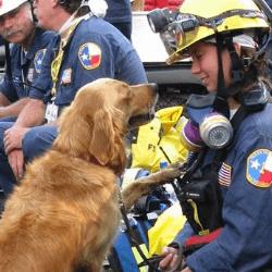 Bretagne chien de sauvetage