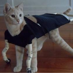 chaton handicapé