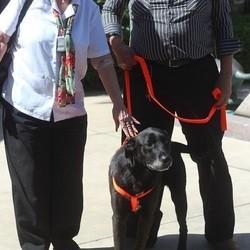 un chien retrouve ses maîtres 7 ans après sa disparition