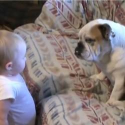 bébé et bulldog