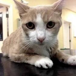un chat sauvé par le sang d'un chien