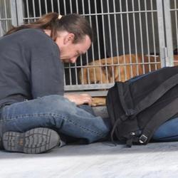 un homme et son chien réunis grâce à la solidarité des internautes