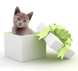 idée cadeau noël animaux chat chien