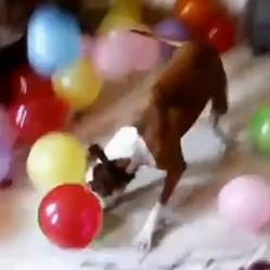 cadeau pour chien ballons