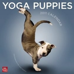calendrier Yoga Puppies