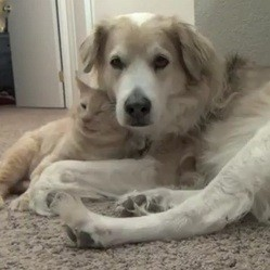 calin chien chat video
