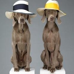 Des chiens prennent la pose pour une marque de vêtements