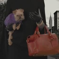 campagne ralph lauren chiens refuge