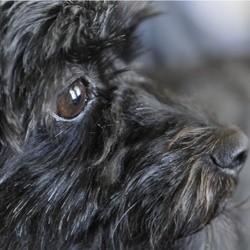 Jeté dans une poubelle, un chien doit la vie à un ticket de loterie