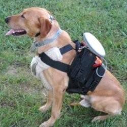Commander un chien à distance