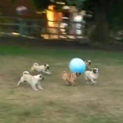 carlin chien jeu football video