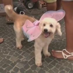 chiens déguisés carnaval de rio