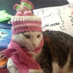 chien chat rongeur vêtements hiver