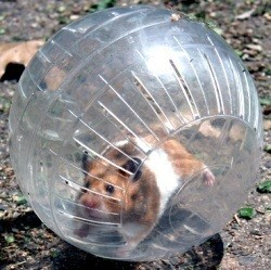 Boule d'exercice hamster