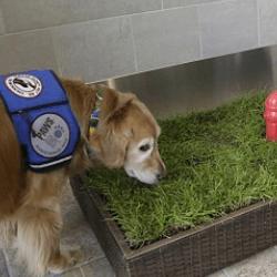 Toilettes pour chiens Detroit