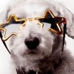 casting chien acteur cinéma