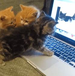 Chats et ordinateur
