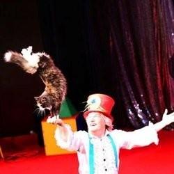 Chat de cirque