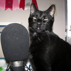 une radio pour les chats