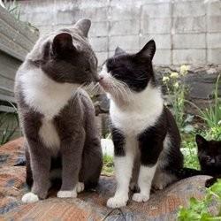 le paradis des chats au japon