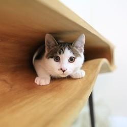 bureau pour chat