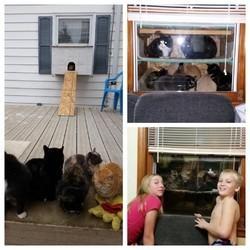 abri pour chats errants