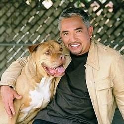 Cesar Millan educateur canin star
