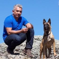 le dresseur de chiens Cesar Millan vient en aide à des chiens abandonnés
