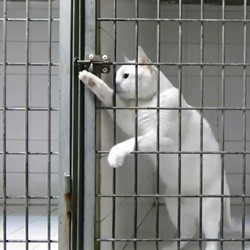 un chat s'évade de sa cage
