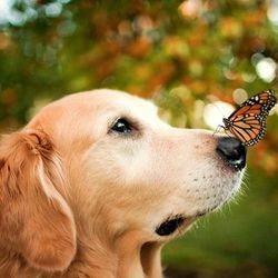 De magnifioques photos d'un chien très heureux