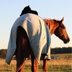 un chat monte à cheval