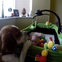 un chien rempli le lit d'un bébé de balles