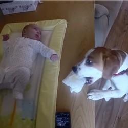 un chien aide sa maîtresse à changer son bébé