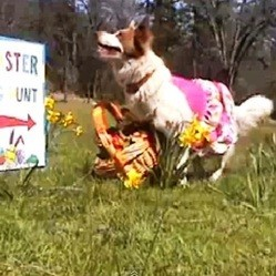 video chien chasse oeufs paques