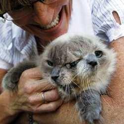 chat deux tetes frank louie record du monde