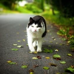 Un chat retrouve ses maîtres après un voyage de 3 000 km