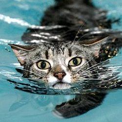mog cat chat hydrothérapie