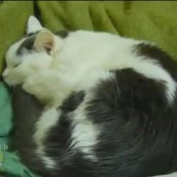 Ce chat aime beaucoup l'accordéon