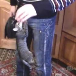 ce chat refuse de laisser son maître partir
