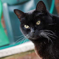 chat âgé vieux vieillesse comportement