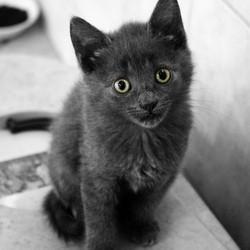 chat animal préféré des francais
