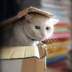 chat animal prefere francais