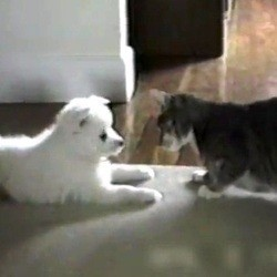 chat apprend tour chien video