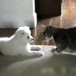 chat apprend tour chien video