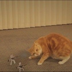 un chat contre une armée de papiers