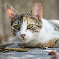 chat dans la rue