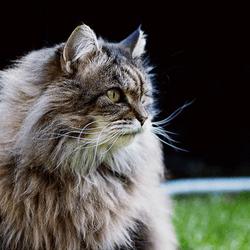 un chat rentre chez lui 8 ans après sa disparition