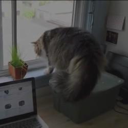 un chat attaqué par  un autre chat
