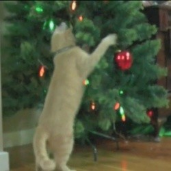 un chat s'attaque à un sapin de noel