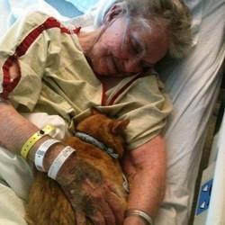 Des animaux dans les hôpitaux et les maisons de retraite, des animaux qui soignent